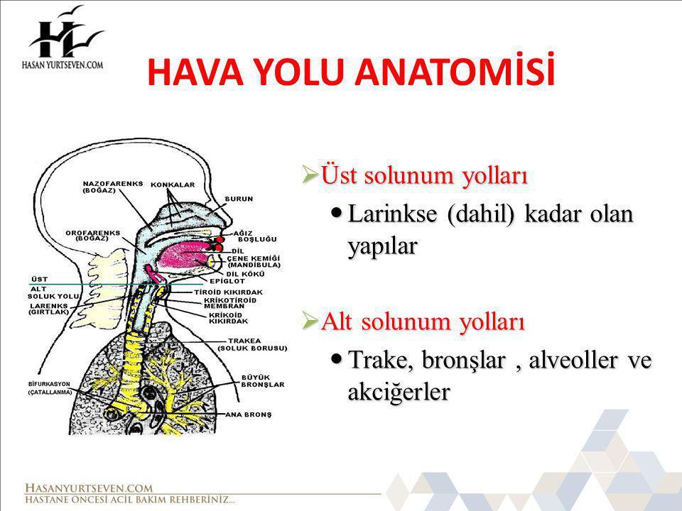 HAVA YOLU ANATOMİSİ  Üst solunum yolları Larinkse (dahil) kadar olan yapılar Larinkse (dahil) kadar olan yapılar  Alt solunum yolları Trake, bronşlar, alveoller ve akciğerler Trake, bronşlar, alveoller ve akciğerler
