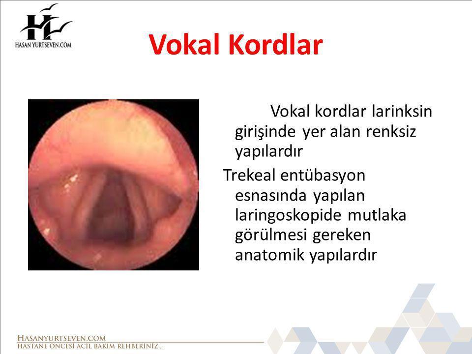 Vokal Kordlar Vokal kordlar larinksin girişinde yer alan renksiz yapılardır Trekeal entübasyon esnasında yapılan laringoskopide mutlaka görülmesi gereken anatomik yapılardır