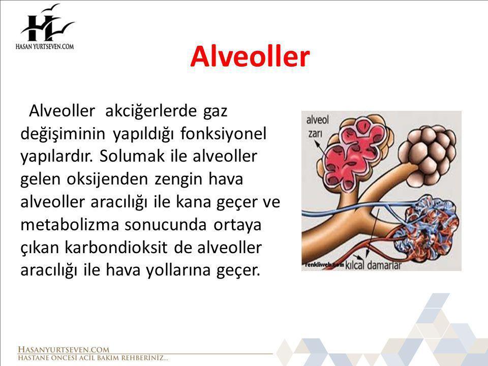 Alveoller Alveoller akciğerlerde gaz değişiminin yapıldığı fonksiyonel yapılardır. Solumak ile alveoller gelen oksijenden zengin hava alveoller aracıl