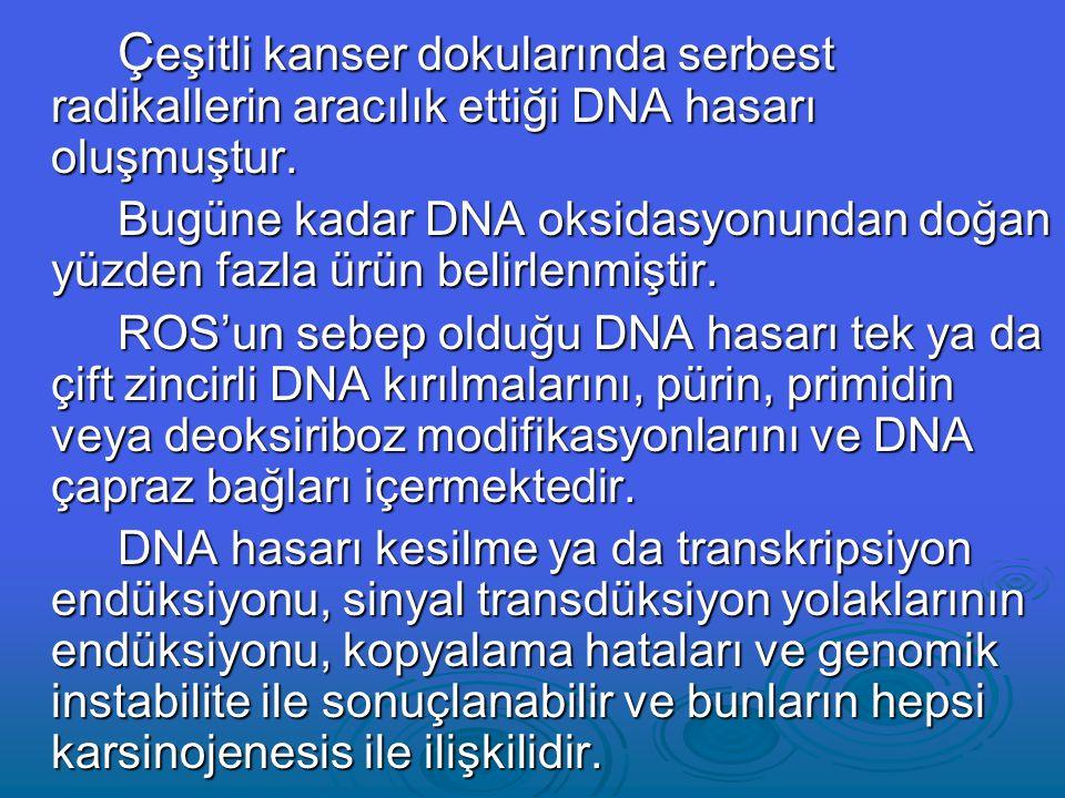 Ç eşitli kanser dokularında serbest radikallerin aracılık ettiği DNA hasarı oluşmuştur.