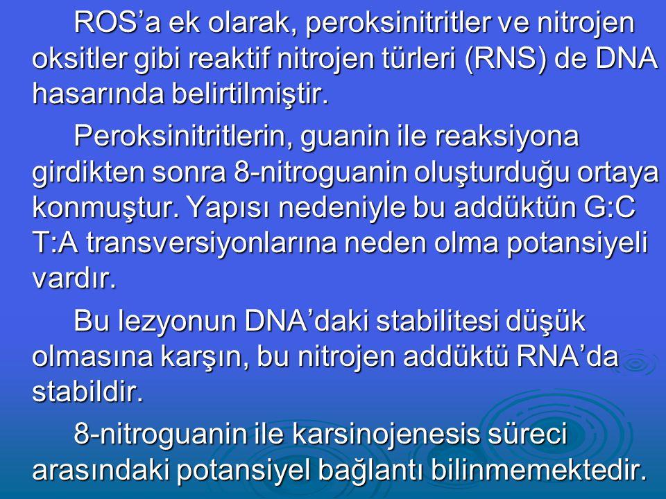 ROS'a ek olarak, peroksinitritler ve nitrojen oksitler gibi reaktif nitrojen türleri (RNS) de DNA hasarında belirtilmiştir.