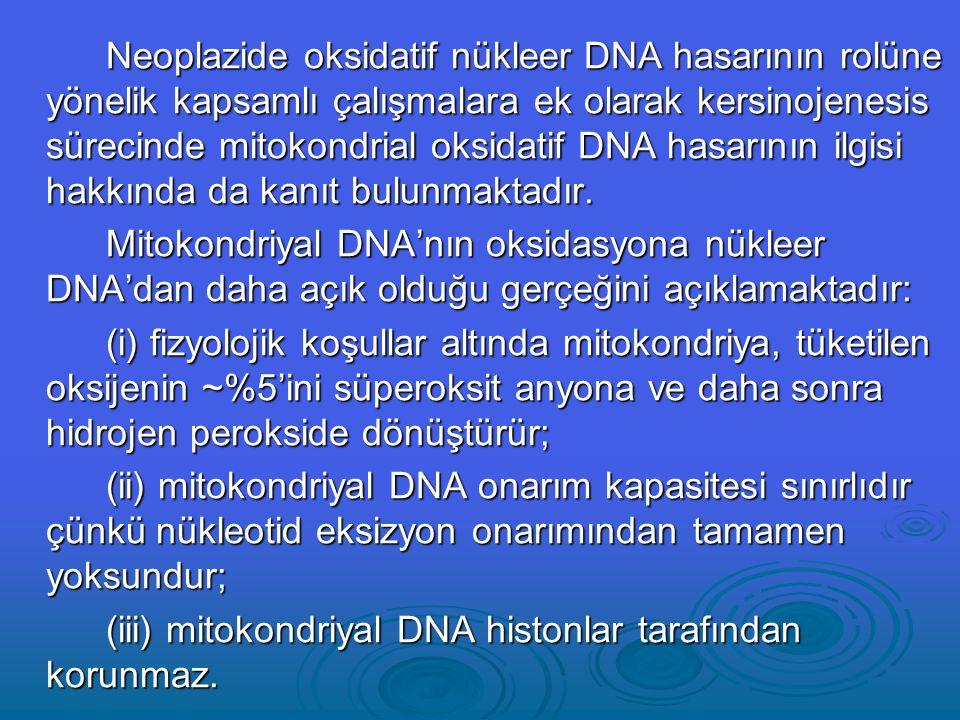 Neoplazide oksidatif nükleer DNA hasarının rolüne yönelik kapsamlı çalışmalara ek olarak kersinojenesis sürecinde mitokondrial oksidatif DNA hasarının ilgisi hakkında da kanıt bulunmaktadır.