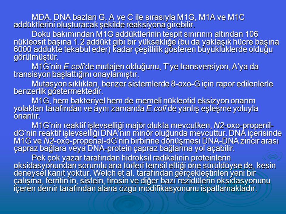 MDA, DNA bazları G, A ve C ile sırasıyla M1G, M1A ve M1C addüktlerini oluşturacak şekilde reaksiyona girebilir.
