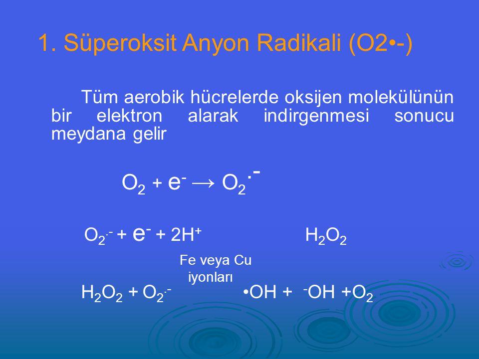 Tüm aerobik hücrelerde oksijen molekülünün bir elektron alarak indirgenmesi sonucu meydana gelir O 2 + e - → O 2.- O 2.- + e - + 2H + H 2 O 2 Fe veya Cu iyonları H 2 O 2 + O 2.- OH + - OH +O 2 1.