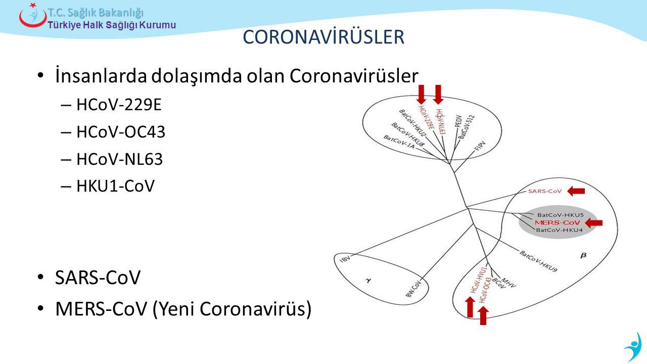 Türkiye Halk Sağlığı Kurumu T.C. Sağlık Bakanlığı CORONAVİRÜSLER İnsanlarda dolaşımda olan Coronavirüsler – HCoV-229E – HCoV-OC43 – HCoV-NL63 – HKU1-C