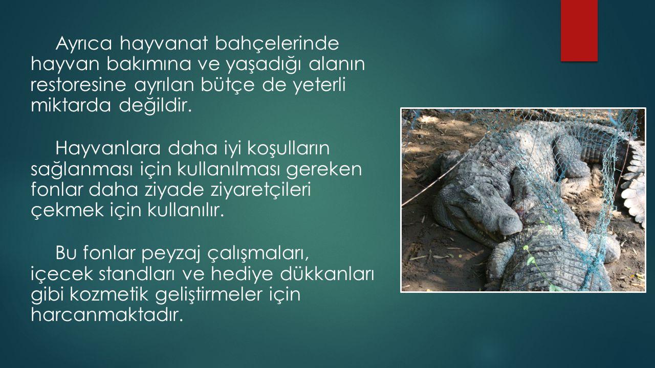 Ayrıca hayvanat bahçelerinde hayvan bakımına ve yaşadığı alanın restoresine ayrılan bütçe de yeterli miktarda değildir.
