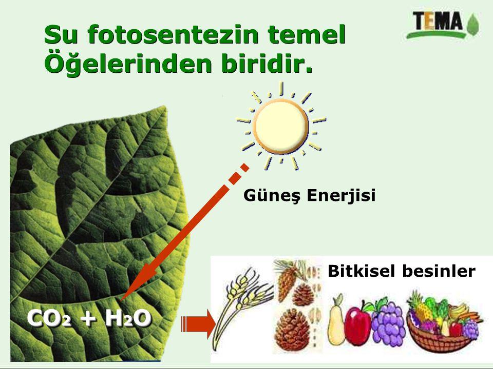 Su fotosentezin temel Öğelerinden biridir. Su fotosentezin temel Öğelerinden biridir. Güneş Enerjisi CO 2 + H 2 O Bitkisel besinler