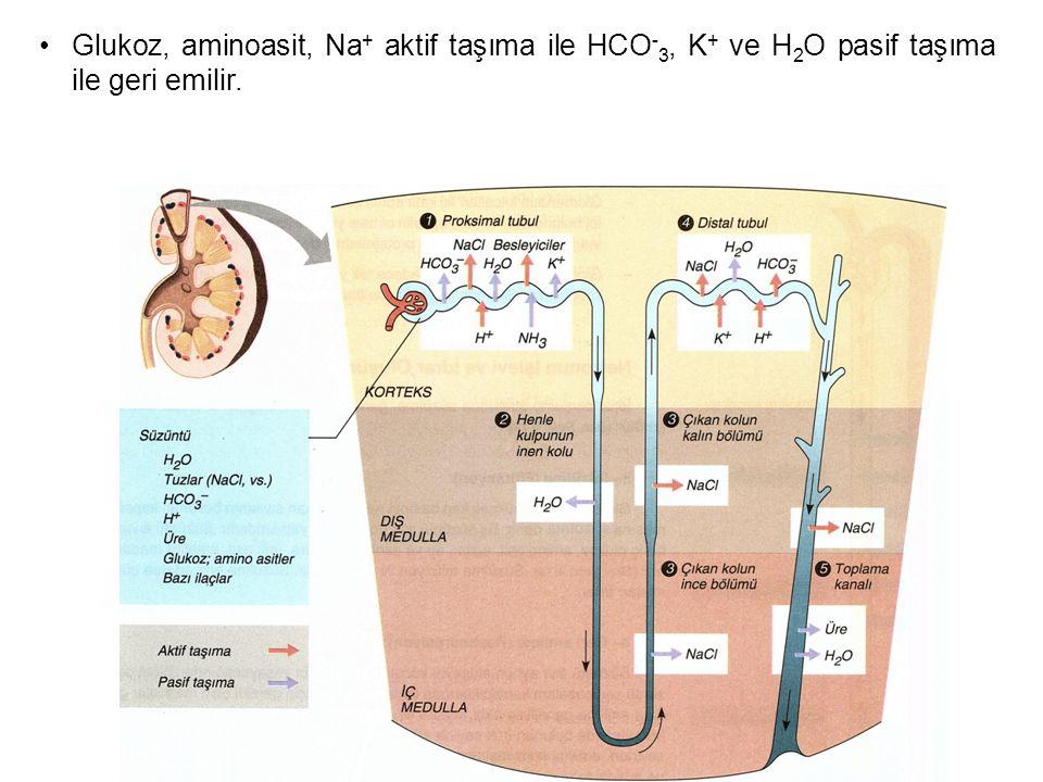 Glukoz, aminoasit, Na + aktif taşıma ile HCO - 3, K + ve H 2 O pasif taşıma ile geri emilir.
