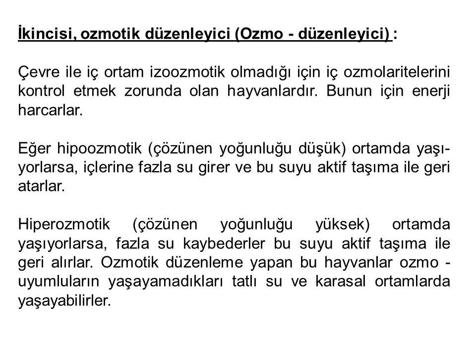 İkincisi, ozmotik düzenleyici (Ozmo - düzenleyici) : Çevre ile iç ortam izoozmotik olmadığı için iç ozmolaritelerini kontrol etmek zorunda olan hayva