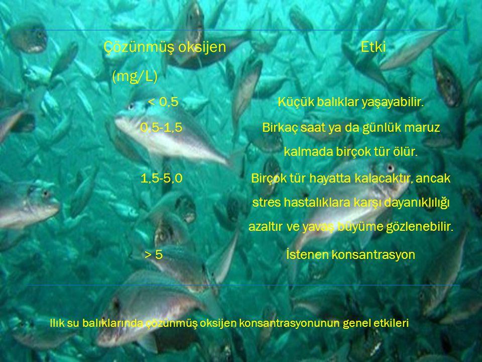 Ilık su balıklarında çözünmüş oksijen konsantrasyonunun genel etkileri Çözünmüş oksijen (mg/L) Etki < 0,5Küçük balıklar yaşayabilir. 0,5-1,5 Birkaç sa