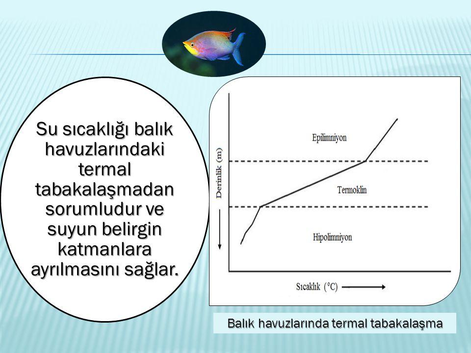 Balık havuzlarında termal tabakalaşma