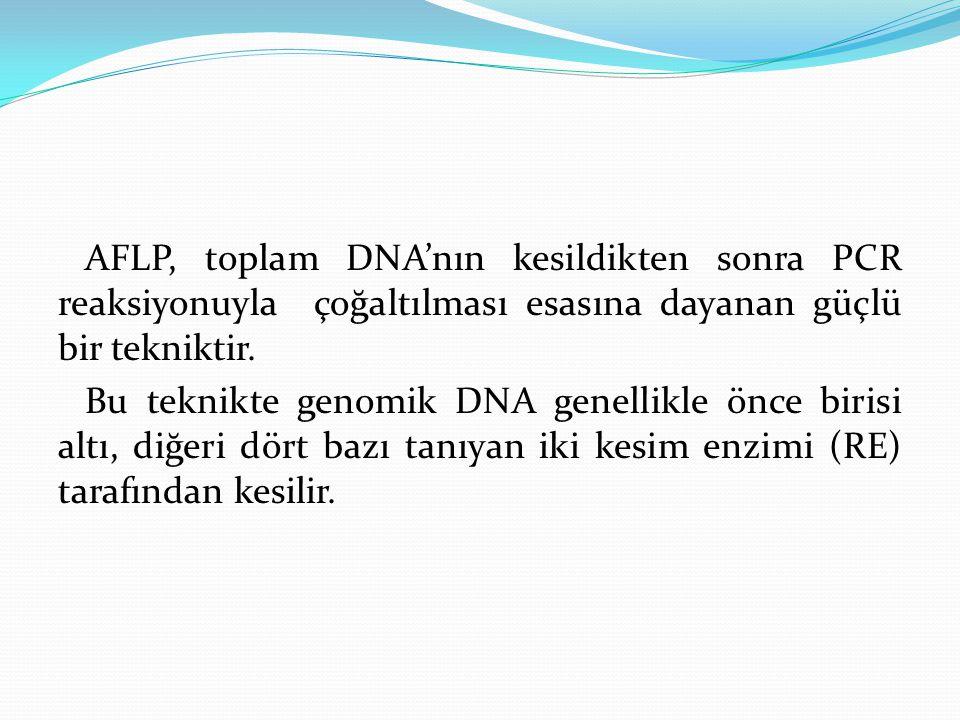 AFLP, toplam DNA'nın kesildikten sonra PCR reaksiyonuyla çoğaltılması esasına dayanan güçlü bir tekniktir. Bu teknikte genomik DNA genellikle önce bir