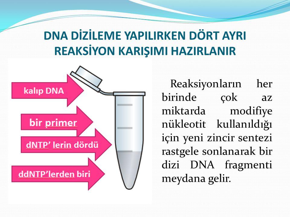 DNA DİZİLEME YAPILIRKEN DÖRT AYRI REAKSİYON KARIŞIMI HAZIRLANIR Reaksiyonların her birinde çok az miktarda modifiye nükleotit kullanıldığı için yeni z