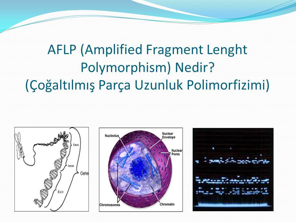 AFLP ANALİZİNİN BASAMAKLARI Genomik DNA'nın Restriksiyon Enzimleriyle Kesilmesi Çift sarmallı Adaptör Sekanslarının Restriksiyon Enzimlerinin kesmiş olduğu kısımlara eklenmesi Ön-Seçici PCR Seçici PCR