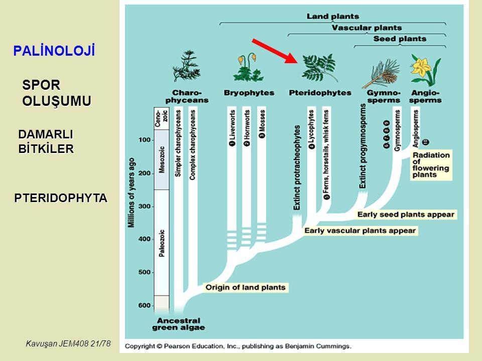 PALİNOLOJİ SPOROLUŞUMU PTERIDOPHYTA DAMARLIBİTKİLER Kavuşan JEM408 21/78