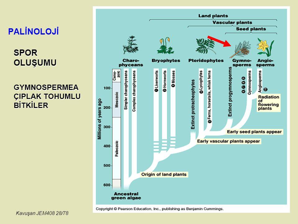 PALİNOLOJİ SPOROLUŞUMU GYMNOSPERMEA ÇIPLAK TOHUMLU BİTKİLER Kavuşan JEM408 28/78