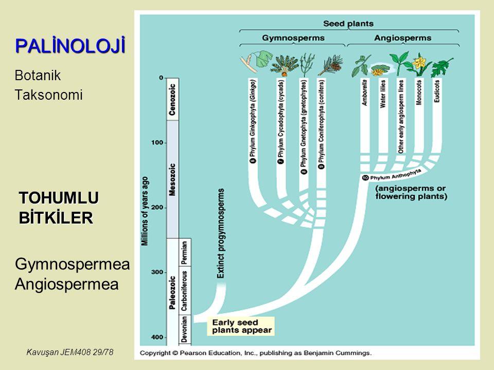 PALİNOLOJİ Botanik Taksonomi Gymnospermea Angiospermea TOHUMLU BİTKİLER Kavuşan JEM408 29/78