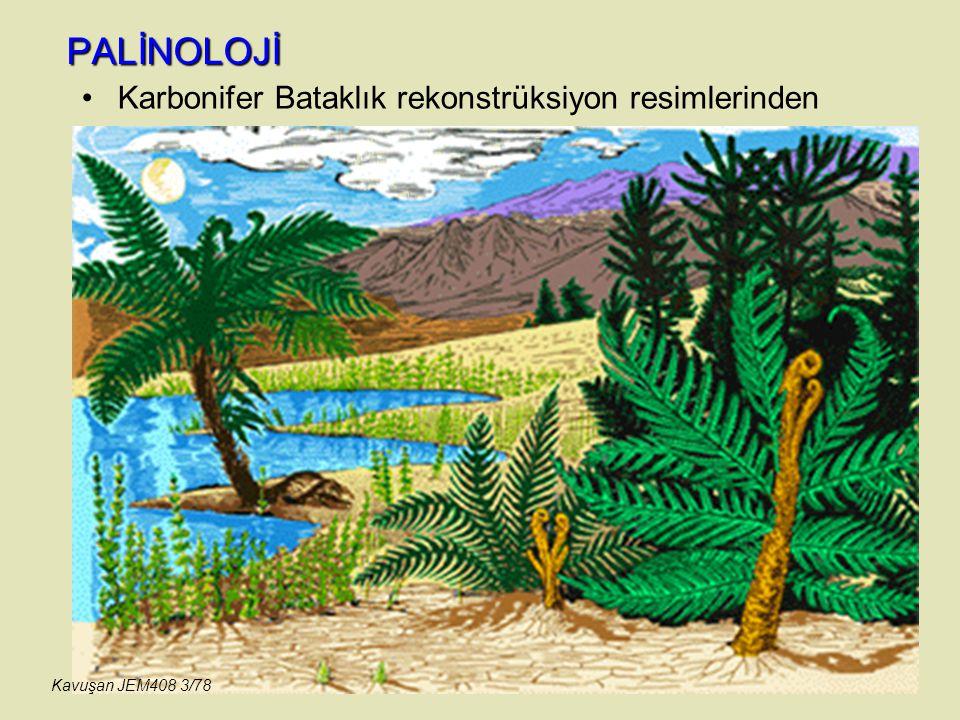 PALİNOLOJİ Karbonifer Bataklık rekonstrüksiyon resimlerinden Kavuşan JEM408 3/78