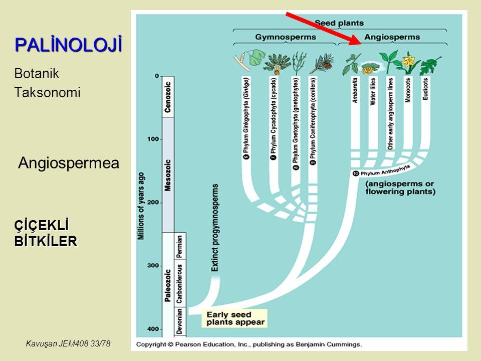 PALİNOLOJİ Botanik Taksonomi Angiospermea ÇİÇEKLİ BİTKİLER Kavuşan JEM408 33/78