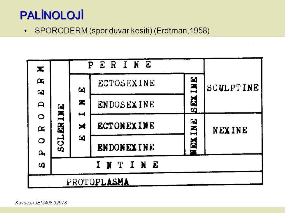 PALİNOLOJİ SPORODERM (spor duvar kesiti) (Erdtman,1958) Kavuşan JEM408 32978
