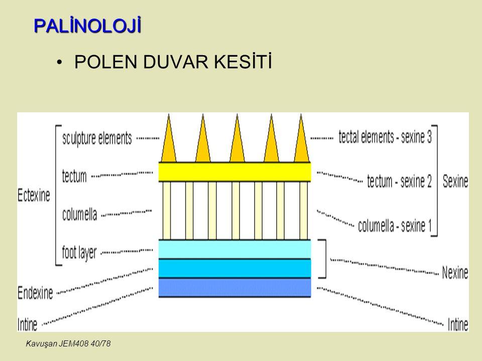 PALİNOLOJİ POLEN DUVAR KESİTİ Kavuşan JEM408 40/78