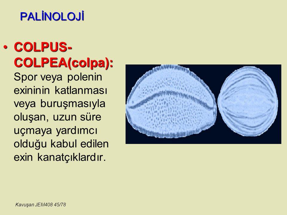 PALİNOLOJİ COLPUS- COLPEA(colpa):COLPUS- COLPEA(colpa): Spor veya polenin exininin katlanması veya buruşmasıyla oluşan, uzun süre uçmaya yardımcı oldu