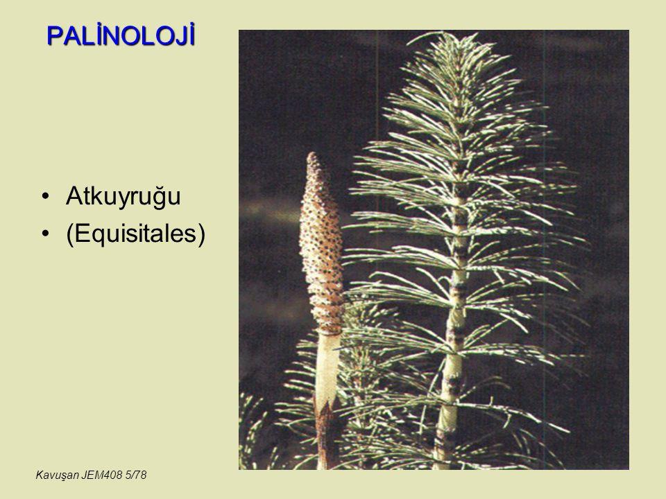 PALİNOLOJİ MONOCOLPATES (Ephedra) Spor ve polenlerin Taksonomisi (Linne) Kavuşan JEM408 56/78