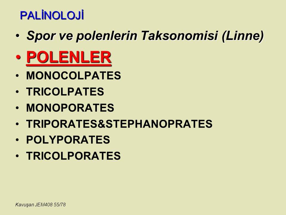 PALİNOLOJİ Spor ve polenlerin Taksonomisi (Linne)Spor ve polenlerin Taksonomisi (Linne) POLENLERPOLENLER MONOCOLPATES TRICOLPATES MONOPORATES TRIPORAT