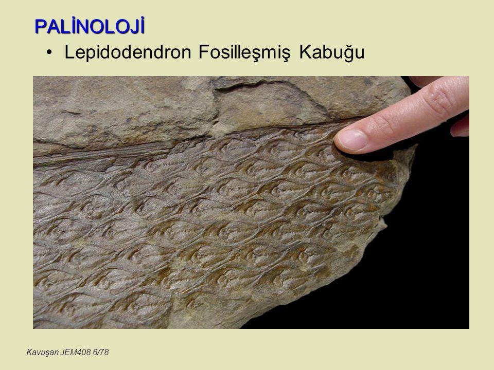 PALİNOLOJİ Süslerin yüzeysel ve kesit olarak görünüşleri Kavuşan JEM408 47/78