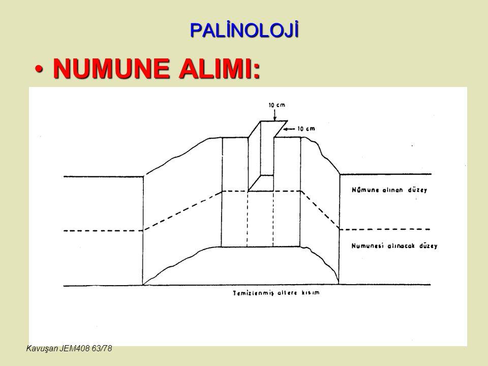PALİNOLOJİ NUMUNE ALIMI:NUMUNE ALIMI: Kavuşan JEM408 63/78