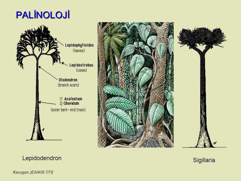 PALİNOLOJİ Lepidodendron Sigillaria Kavuşan JEM408 7/78