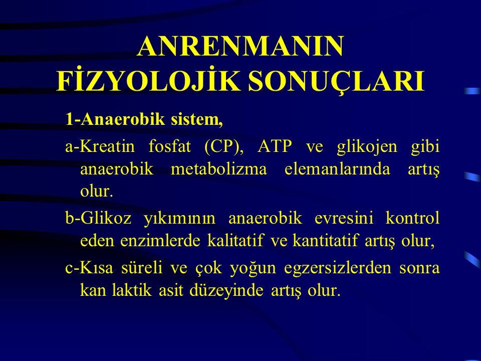 ANRENMANIN FİZYOLOJİK SONUÇLARI 1-Anaerobik sistem, a-Kreatin fosfat (CP), ATP ve glikojen gibi anaerobik metabolizma elemanlarında artış olur.