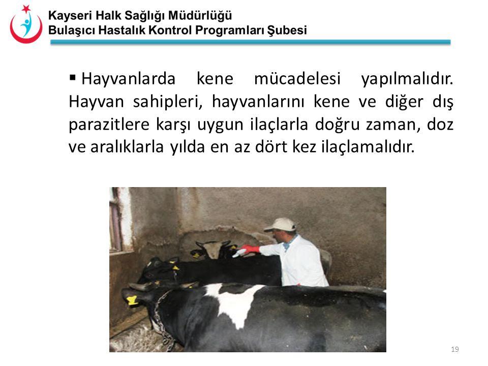 18  Hastalık hayvanlarda belirti göstermeden seyrettiğinden hastalığın sık olarak görüldüğü bölgelerde bulunan hayvanlar sağlıklı görünse bile hastal
