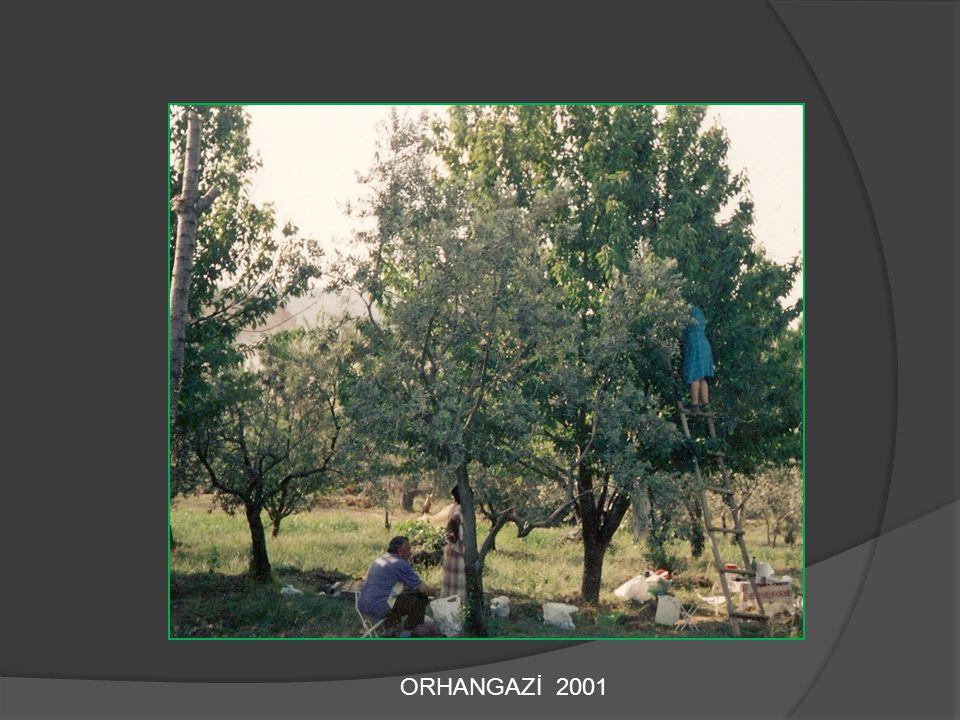 ORHANGAZİ 2001