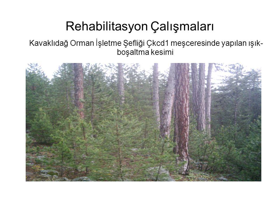 Rehabilitasyon Çalışmaları Kavaklıdağ Orman İşletme Şefliği Çkcd1 meşceresinde yapılan ışık- boşaltma kesimi