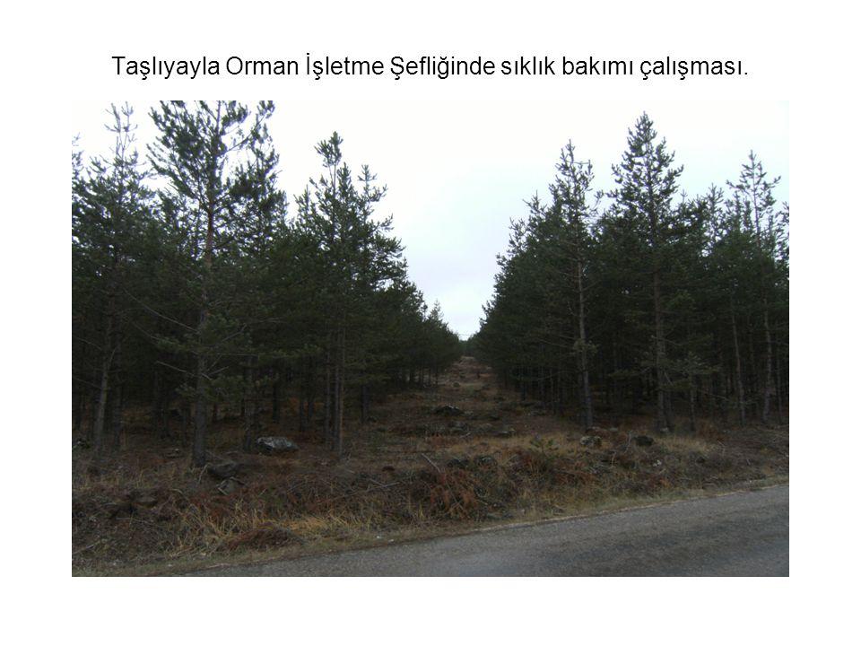 Taşlıyayla Orman İşletme Şefliğinde sıklık bakımı çalışması.