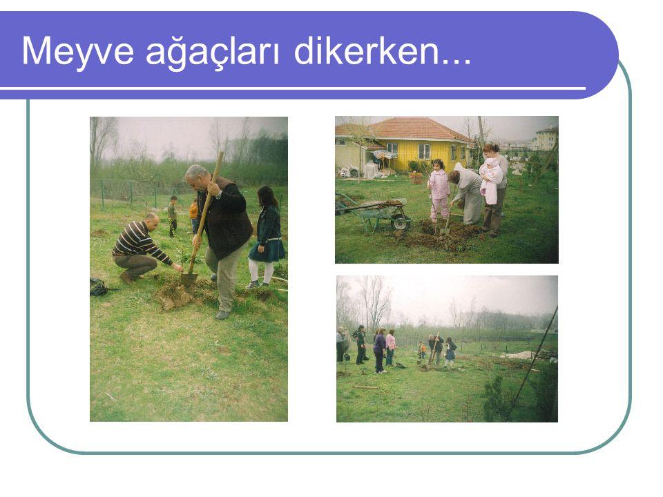 Meyve ağaçları dikerken...