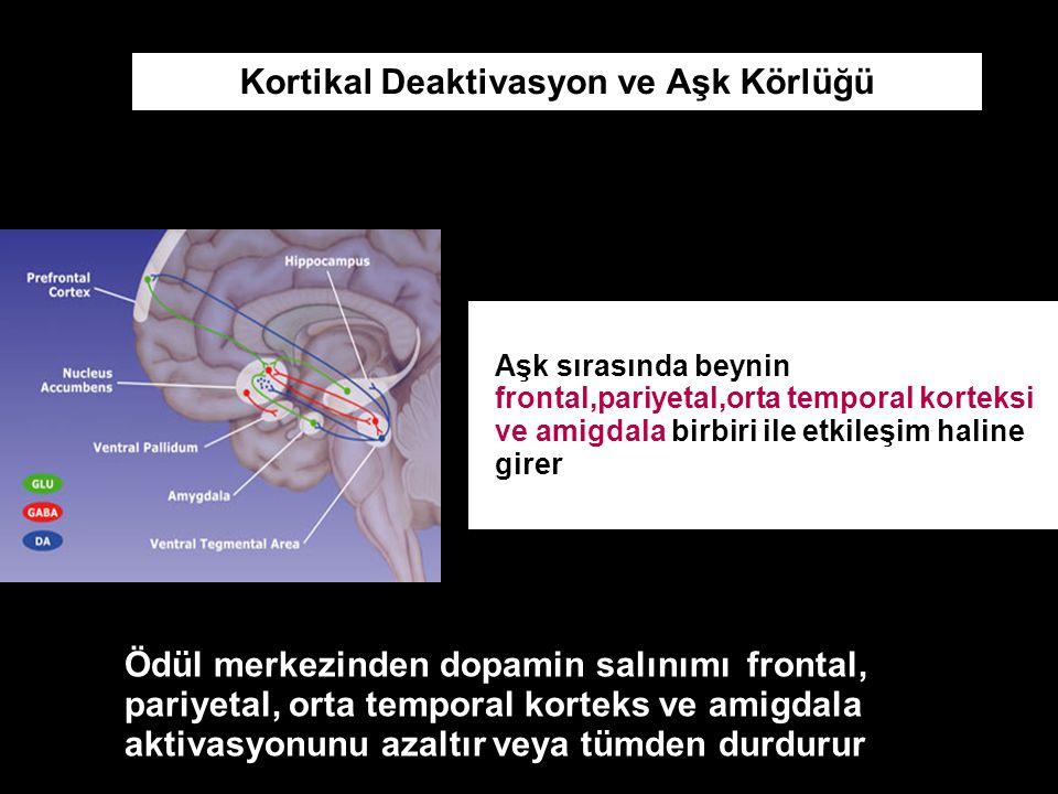 Kortikal Deaktivasyon ve Aşk Körlüğü Aşk sırasında beynin frontal,pariyetal,orta temporal korteksi ve amigdala birbiri ile etkileşim haline girer Ödül