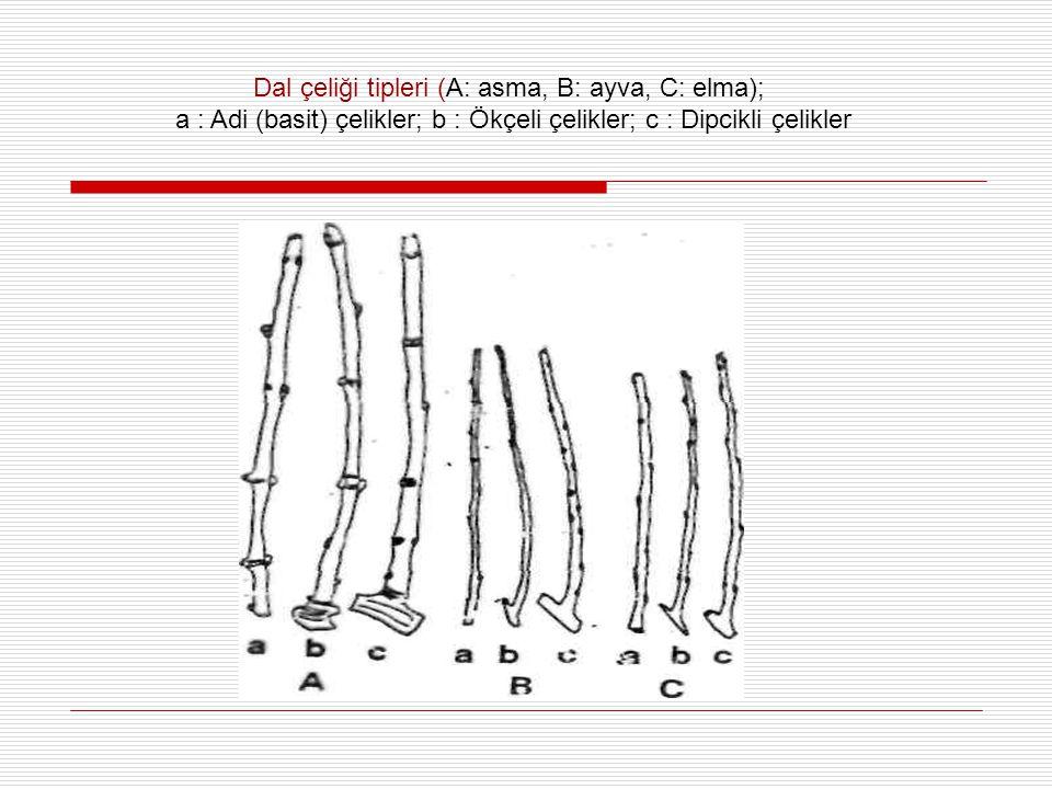 Dal çeliği tipleri (A: asma, B: ayva, C: elma); a : Adi (basit) çelikler; b : Ökçeli çelikler; c : Dipcikli çelikler