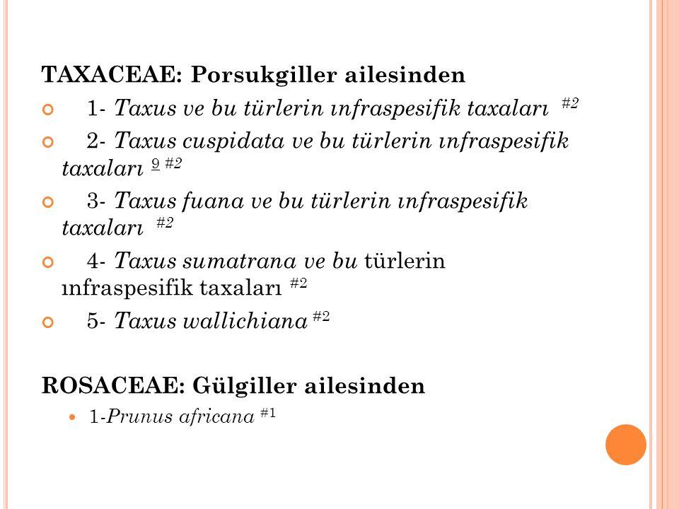 TAXACEAE: Porsukgiller ailesinden 1- Taxus ve bu türlerin ınfraspesifik taxaları #2 2- Taxus cuspidata ve bu türlerin ınfraspesifik taxaları 9 #2 3- T