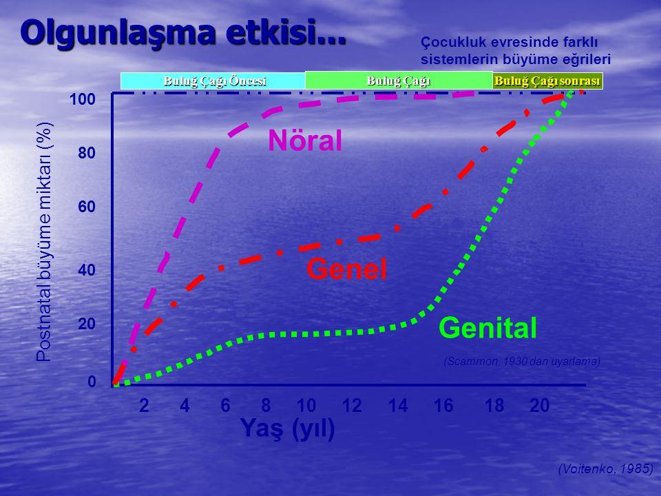 Olgunlaşma etkisi... 100 80 60 40 20 0 Postnatal büyüme miktarı (%) 2 4 6 8 10 12 14 16 18 20 Yaş (yıl) (Scammon, 1930'dan uyarlama) Çocukluk evresind