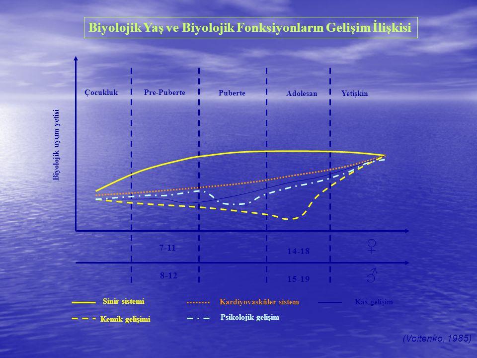 7-11 8-12 15-19 14-18 ♀ ♂ Sinir sistemi Kemik gelişimi Kardiyovasküler sistem Psikolojik gelişim Kas gelişim Puberte Pre-PuberteÇocukluk AdolesanYetiş