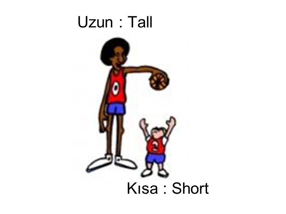 Kısa : Short Uzun : Tall