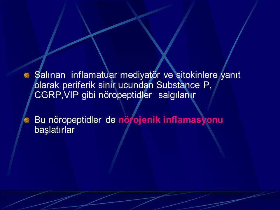Salınan inflamatuar mediyatör ve sitokinlere yanıt olarak periferik sinir ucundan Substance P, CGRP,VIP gibi nöropeptidler salgılanır Bu nöropeptidler