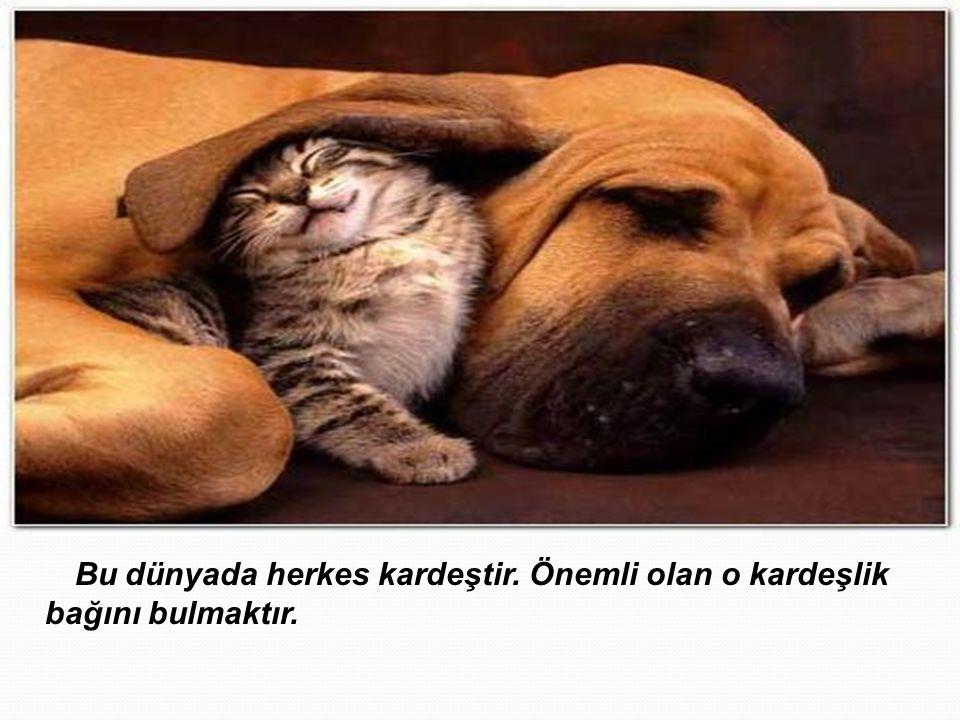 Bu dünyada herkes kardeştir. Önemli olan o kardeşlik bağını bulmaktır.
