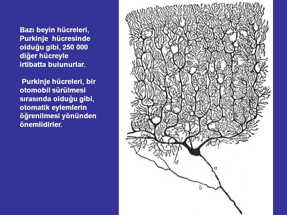 Beynimiz, her biri ortalama binlerce diğer hücreyle ilişkili olan, 100 milyar beyin hücresi ihtiva eder. Böylece başımızda, 100 bin milyar bağlantı va