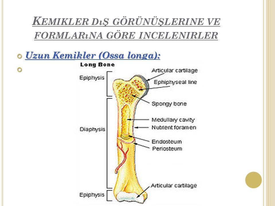 K EMIKLER DıŞ GÖRÜNÜŞLERINE VE FORMLARıNA GÖRE INCELENIRLER Uzun Kemikler (Ossa longa):