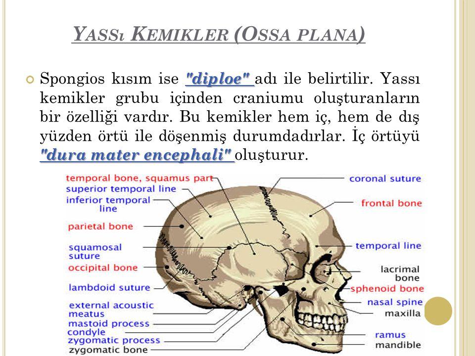Y ASSı K EMIKLER (O SSA PLANA ) diploe dura mater encephali Spongios kısım ise diploe adı ile belirtilir.