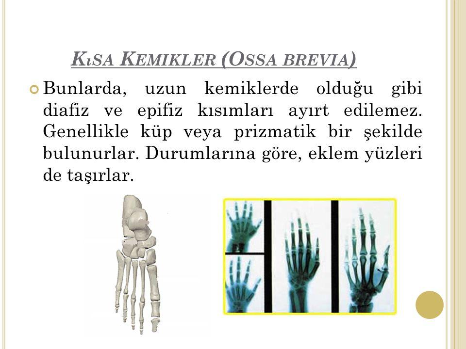 K ıSA K EMIKLER (O SSA BREVIA ) Bunlarda, uzun kemiklerde olduğu gibi diafiz ve epifiz kısımları ayırt edilemez.