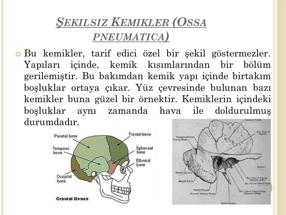 Ş EKILSIZ K EMIKLER (O SSA PNEUMATICA ) Bu kemikler, tarif edici özel bir şekil göstermezler.